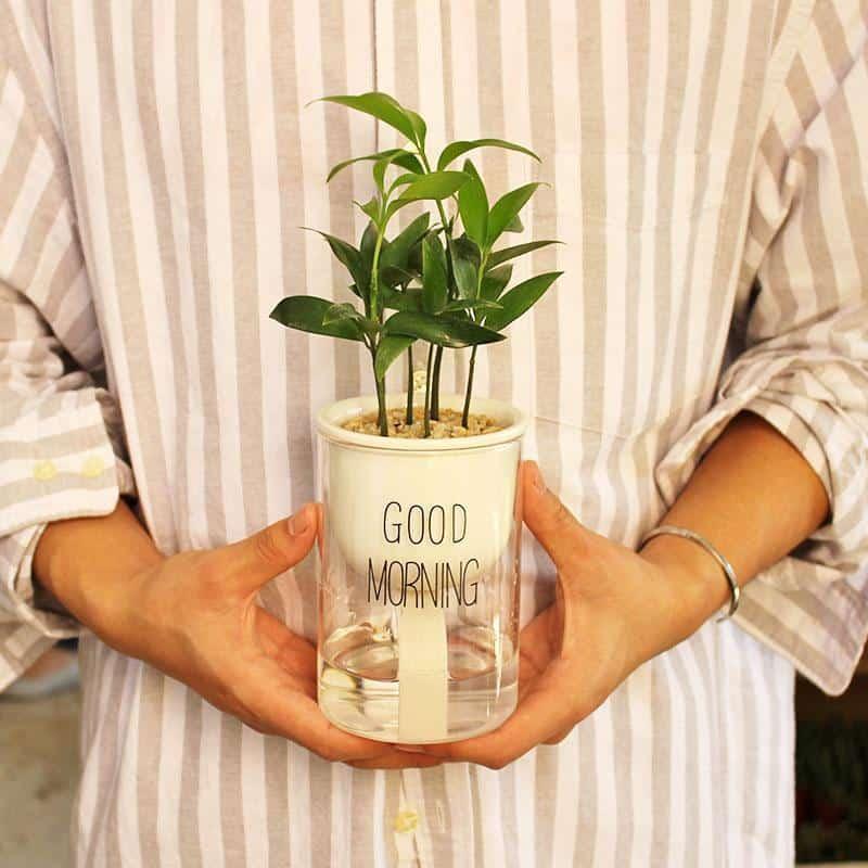 Automaton Morning Flower Vase Vase