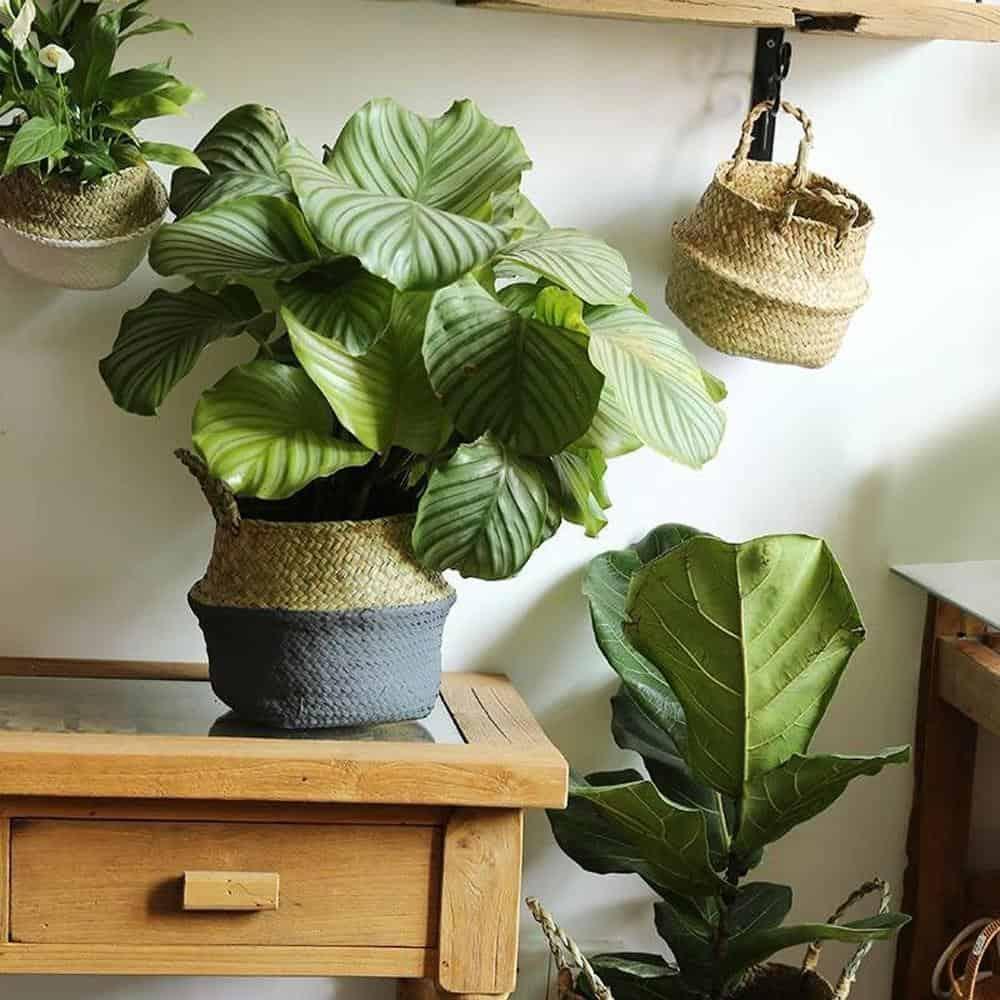 Linnéa by Sebastian Odenberg / Basket Plant pot
