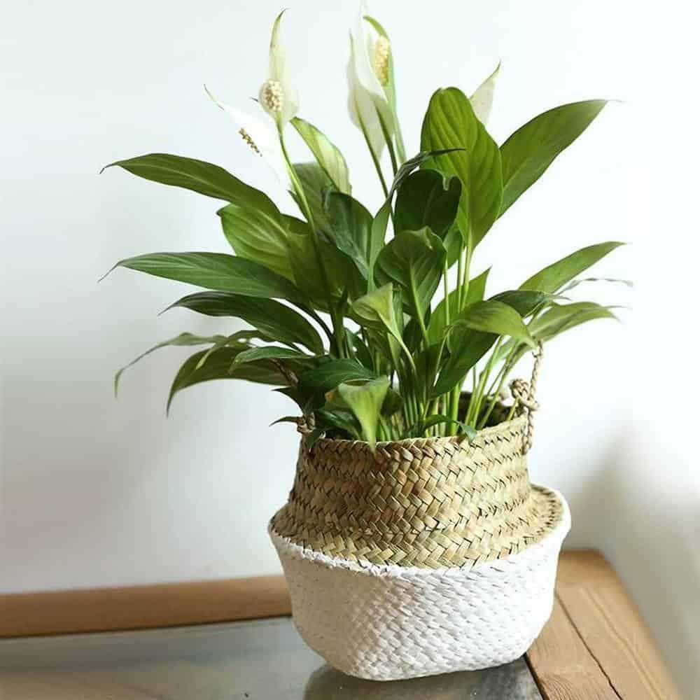 Linnéa by Sebastian Odenberg / Basket Plant pot White / 25X27cm