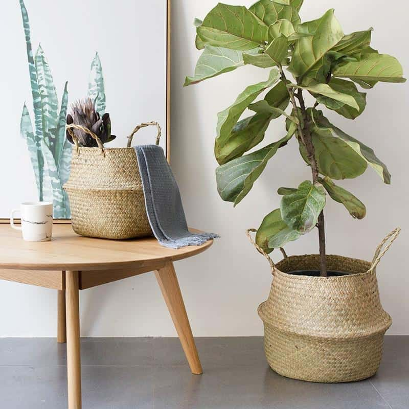 Natural by Sebastian Odenberg / Basket