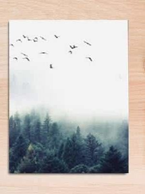 Fabulous Trio Foggy Forest | Zenk | Unframed Canvas Art