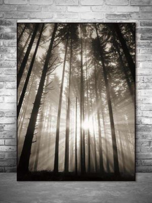 Roll In The Deep | The Forest | Unframed Canvas Art