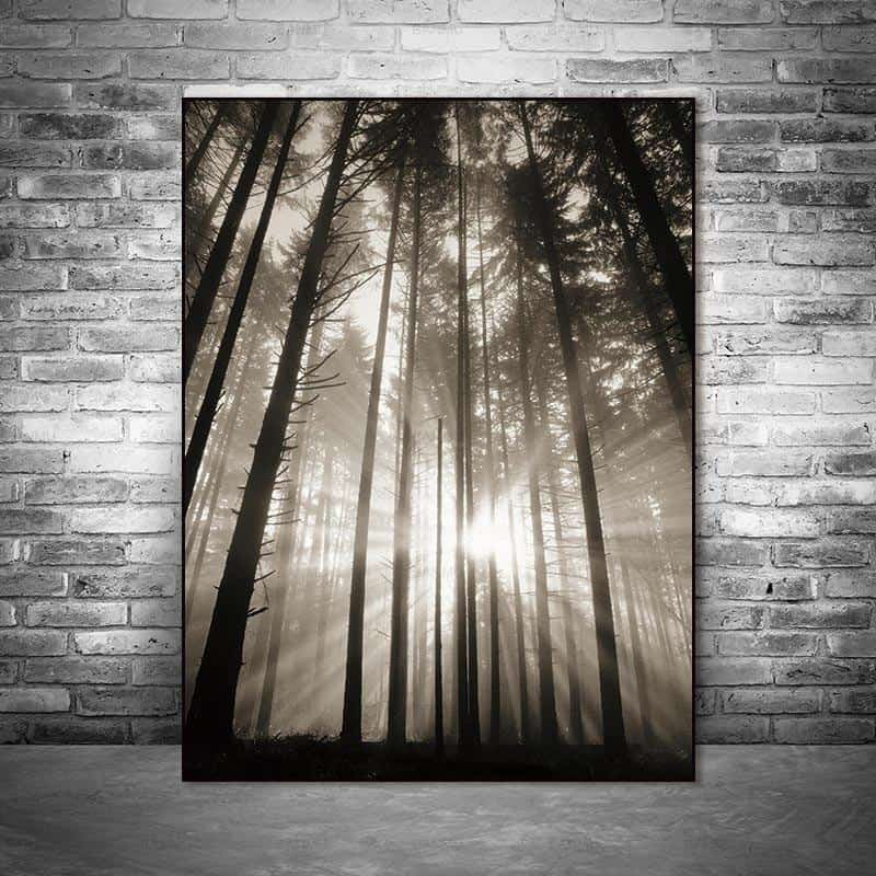 Roll In The Deep   The Forest Canvas print - Wall Art
