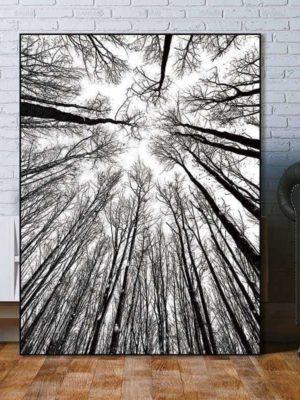 Bird View Minimalism Forest   Unframed Canvas Art