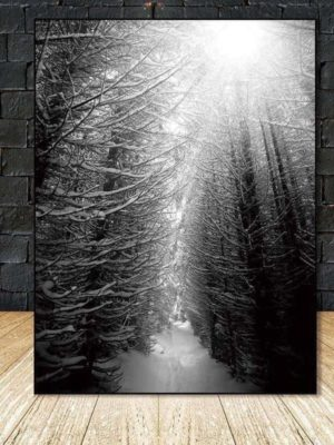 Find Your Fairytale In The Wood   Foggy Winter Forest   Unframed Canvas Art
